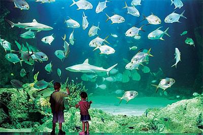 aquarium besar