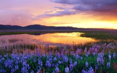 keridhoan jiwa, laksana padang rumput luas yang ditumbuhi wewangian bunga