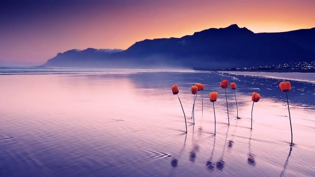 nature-landscapes_hdwallpaper_flowers-representing-hope_1229