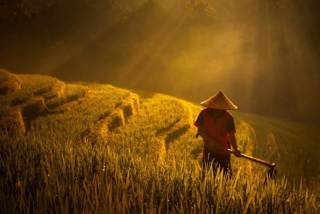 Balinese Farmer at Sunrise